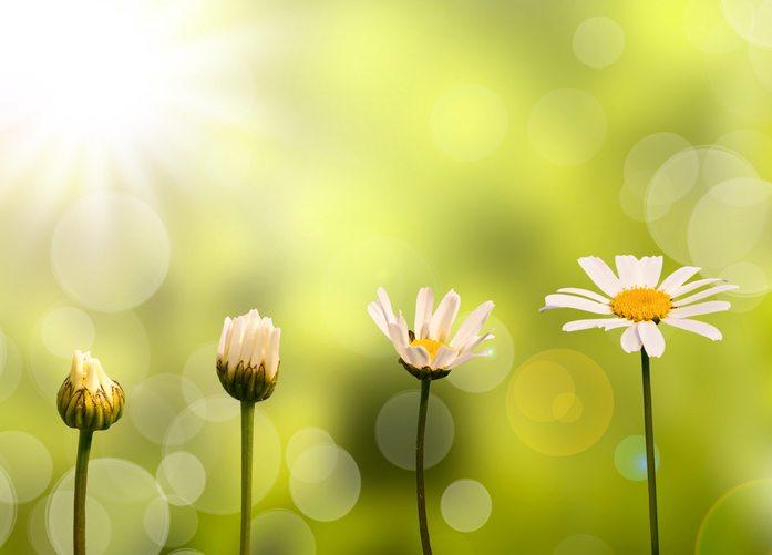 Исполнение желаний весной